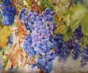 grapes, vineyard, wine