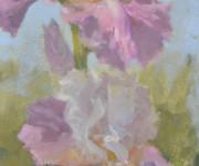 Iris, pink, flower